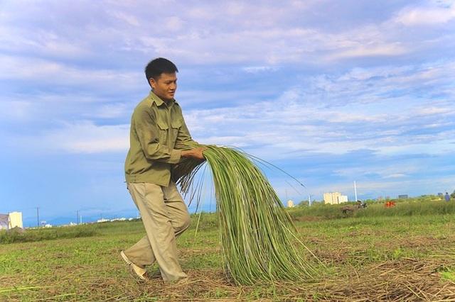 Vẻ đẹp thôn quê bình dị mùa thu hoạch cói ở ốc đảo Hồng Lam - 9
