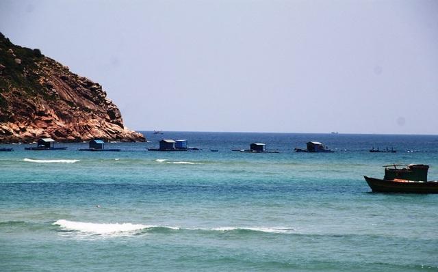 Bình Định: Ngư dân tính bỏ nghề vì giá tôm hùm ...rớt tận đáy - 3