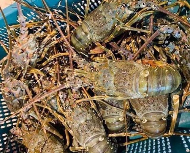 Tôm hùm giảm giá 50%, cá mú ế ẩm bị bỏ đói, nghìn tấn ngao ứ đọng - 1