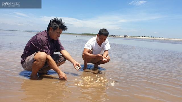 Tôm hùm giảm giá 50%, cá mú ế ẩm bị bỏ đói, nghìn tấn ngao ứ đọng - 2
