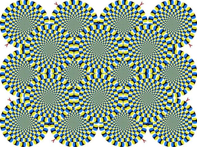 Ruồi bị lừa bởi ảo ảnh quang học giống con người - 2