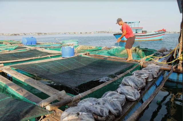 Về Ninh Thuận ra làng bè Đông Hải xem tắm cá - 10