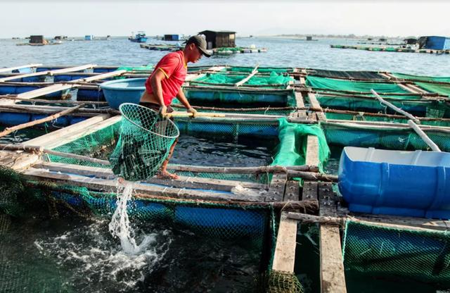 Về Ninh Thuận ra làng bè Đông Hải xem tắm cá - 11