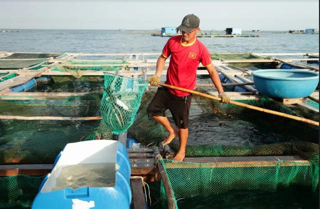 Về Ninh Thuận ra làng bè Đông Hải xem tắm cá - 12