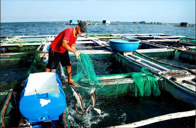 Về Ninh Thuận ra làng bè Đông Hải xem tắm cá - 13