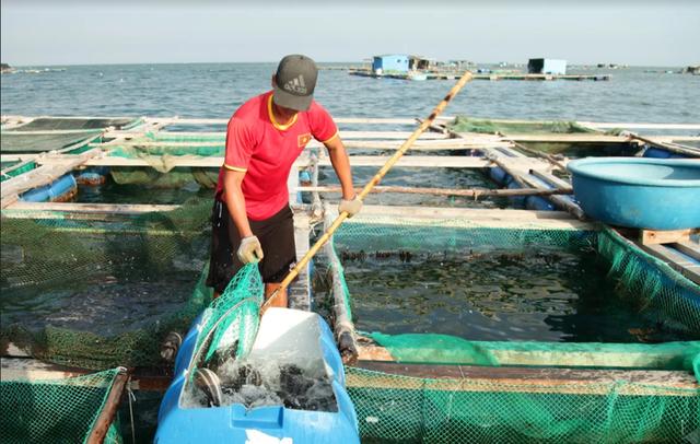 Về Ninh Thuận ra làng bè Đông Hải xem tắm cá - 14