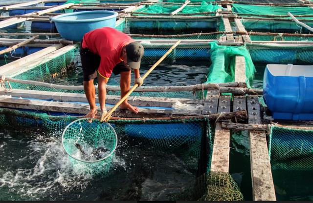 Về Ninh Thuận ra làng bè Đông Hải xem tắm cá - 3
