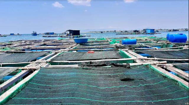 Về Ninh Thuận ra làng bè Đông Hải xem tắm cá - 6