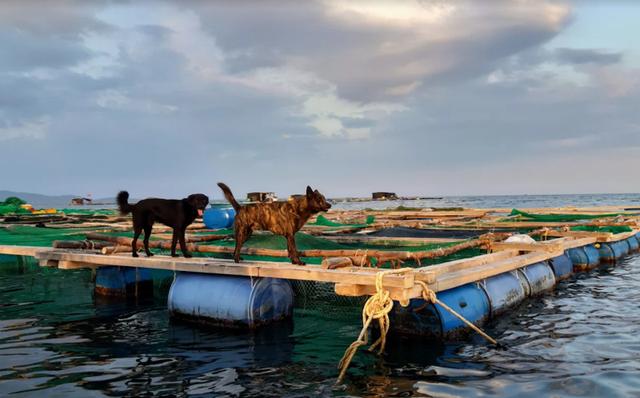 Về Ninh Thuận ra làng bè Đông Hải xem tắm cá - 8