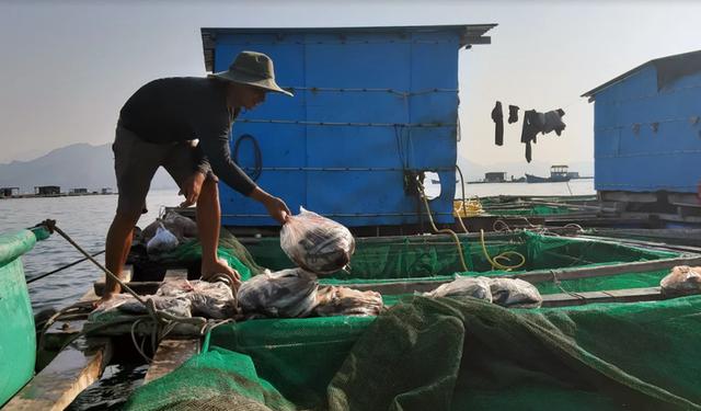 Về Ninh Thuận ra làng bè Đông Hải xem tắm cá - 9