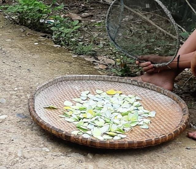 Trên 2 vạn người dân ở huyện biên giới Nghệ An cần gạo cứu đói - 7