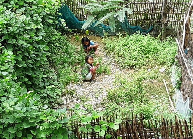 Trên 2 vạn người dân ở huyện biên giới Nghệ An cần gạo cứu đói - 8