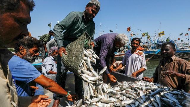 Ngư dân Pakistan lo tàu cá Trung Quốc đánh bắt cạn kiệt tài nguyên - 1