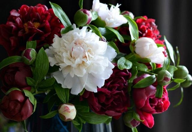 Những bông hoa tuyệt đẹp nhưng rơi là... vỡ vụn - 1