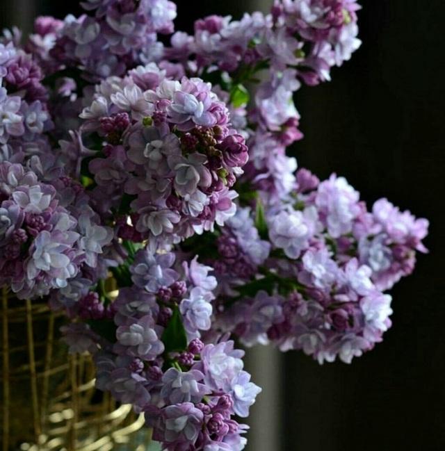 Những bông hoa tuyệt đẹp nhưng rơi là... vỡ vụn - 5