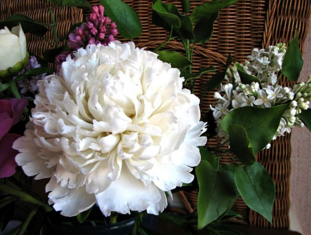 Những bông hoa tuyệt đẹp nhưng rơi là... vỡ vụn - 7