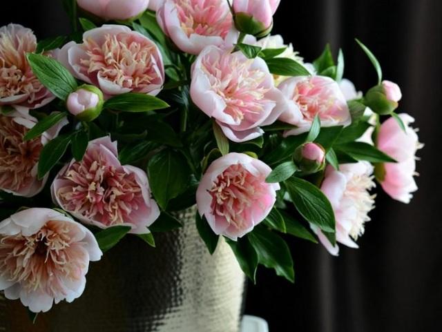 Những bông hoa tuyệt đẹp nhưng rơi là... vỡ vụn - 9