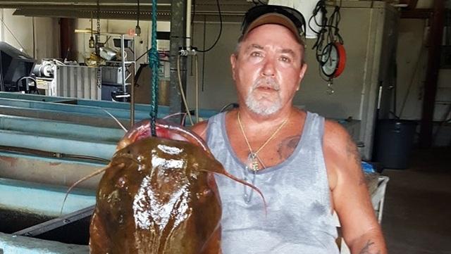 Cá trê dài 1,2m nặng 31,7 kg cắn câu - 2