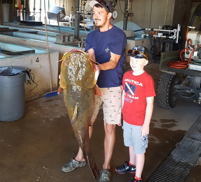 Cá trê dài 1,2m nặng 31,7 kg cắn câu - 3