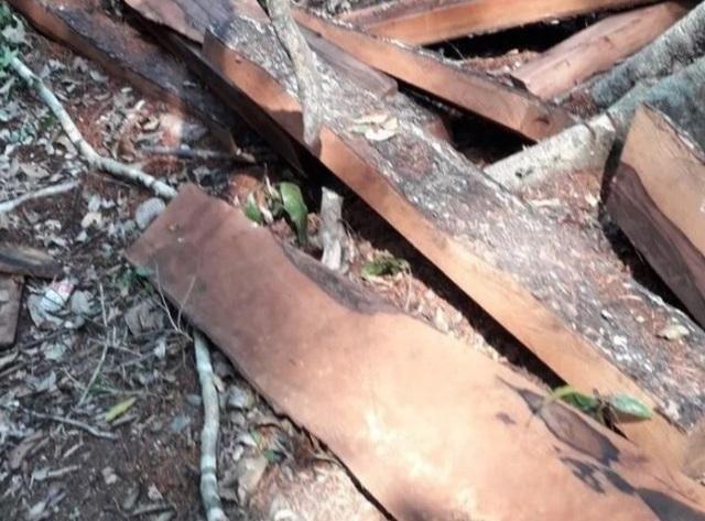 Vụ phá rừng di sản: 17 lâm tặc và 1 trạm trưởng kiểm lâm lãnh án - 3