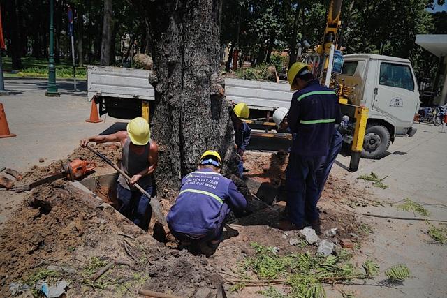 TPHCM: Đốn hạ cây xanh trước Hội trường Thống Nhất - 3