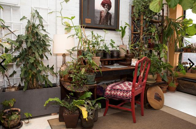 """Căn nhà gây """"sốt"""" mạng vì trồng 700 cây xanh như rừng nhiệt đới - 8"""