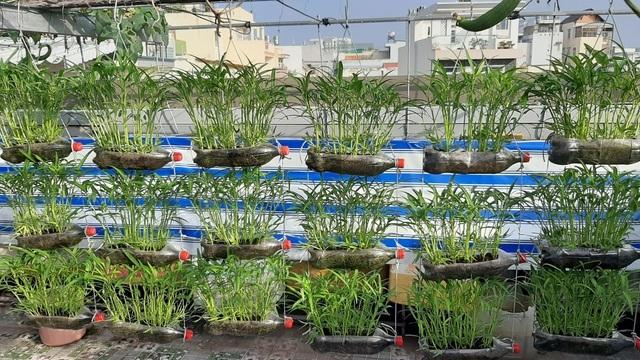 Ấn tượng với những trang trại nuôi cá, thả gà, trồng rau trên sân thượng - 1