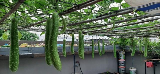 Ấn tượng với những trang trại nuôi cá, thả gà, trồng rau trên sân thượng - 4