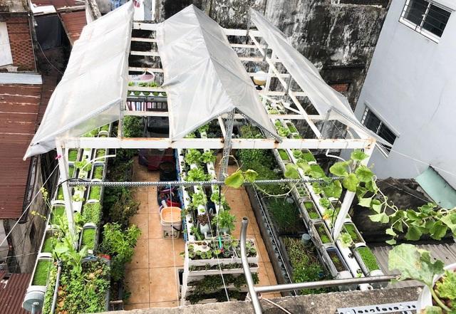 Ấn tượng với những trang trại nuôi cá, thả gà, trồng rau trên sân thượng - 16