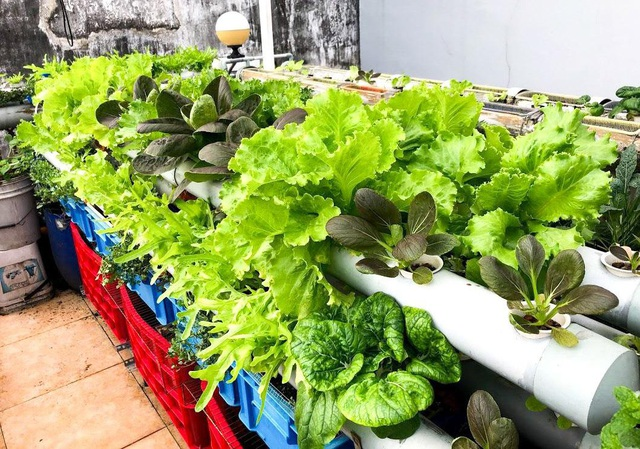 Ấn tượng với những trang trại nuôi cá, thả gà, trồng rau trên sân thượng - 17