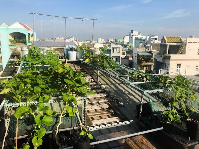 Ấn tượng với những trang trại nuôi cá, thả gà, trồng rau trên sân thượng - 19