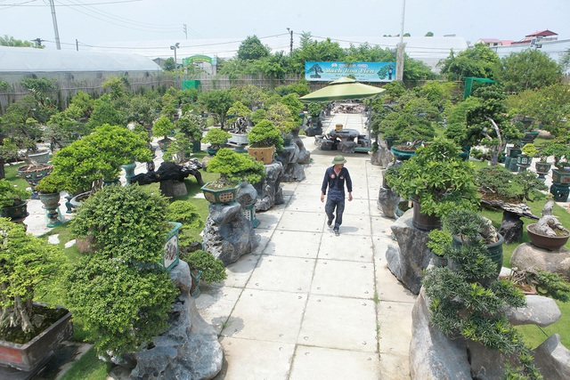 Mục sở thị khu vườn gần 1.000 cây cảnh bonsai hiếm có đất Hà Thành - 1