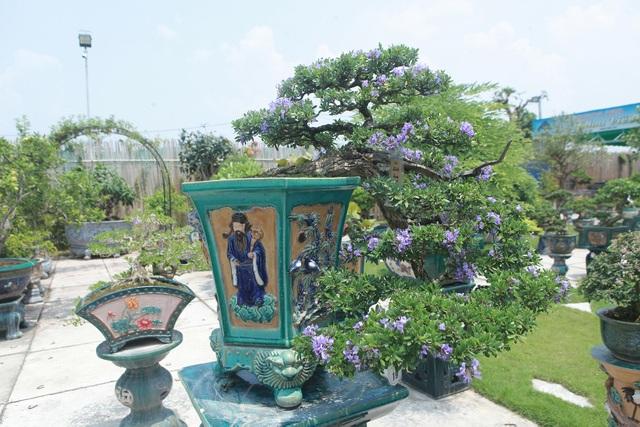 Mục sở thị khu vườn gần 1.000 cây cảnh bonsai hiếm có đất Hà Thành - 10