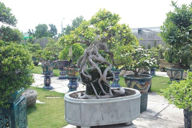 Mục sở thị khu vườn gần 1.000 cây cảnh bonsai hiếm có đất Hà Thành - 12