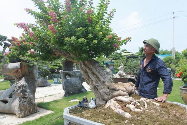Mục sở thị khu vườn gần 1.000 cây cảnh bonsai hiếm có đất Hà Thành - 13