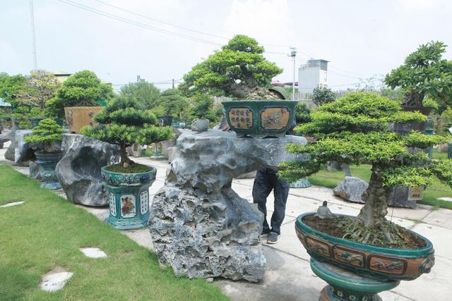 Mục sở thị khu vườn gần 1.000 cây cảnh bonsai hiếm có đất Hà Thành - 2