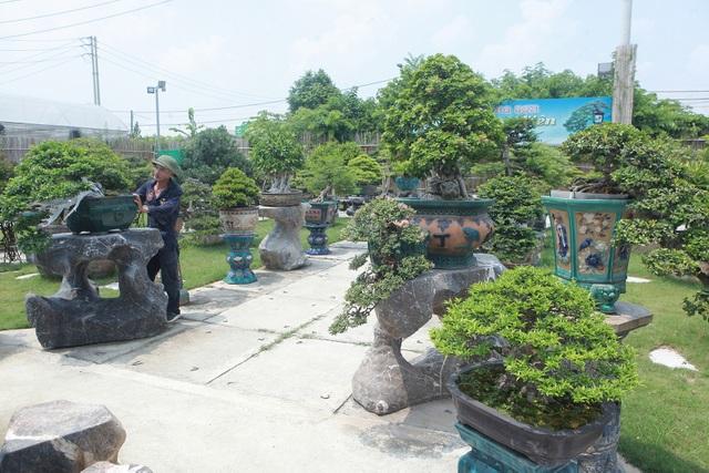 Mục sở thị khu vườn gần 1.000 cây cảnh bonsai hiếm có đất Hà Thành - 3
