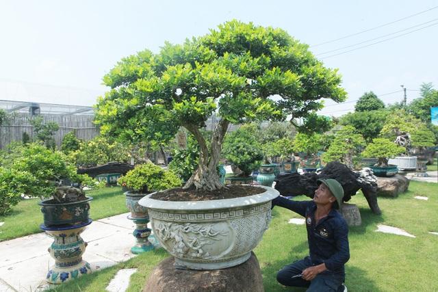 Mục sở thị khu vườn gần 1.000 cây cảnh bonsai hiếm có đất Hà Thành - 4