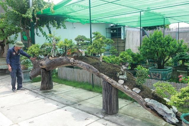 Mục sở thị khu vườn gần 1.000 cây cảnh bonsai hiếm có đất Hà Thành - 5