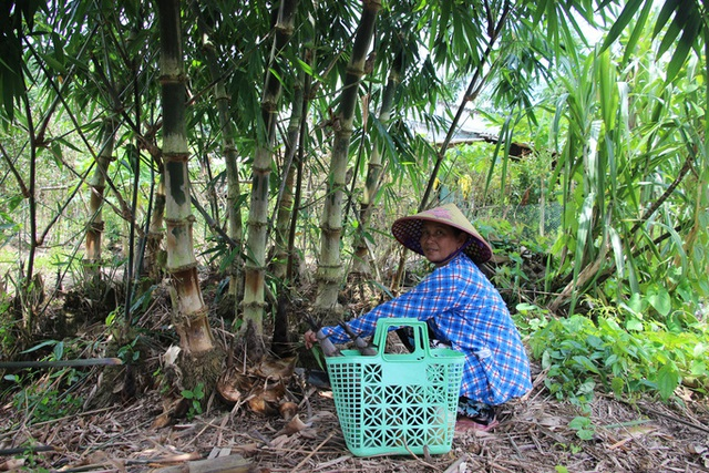 Thu lãi trăm triệu đồng nhờ trồng loại cây bán không bỏ thứ gì - 5