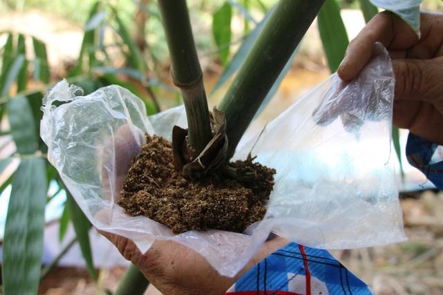 Thu lãi trăm triệu đồng nhờ trồng loại cây bán không bỏ thứ gì - 8