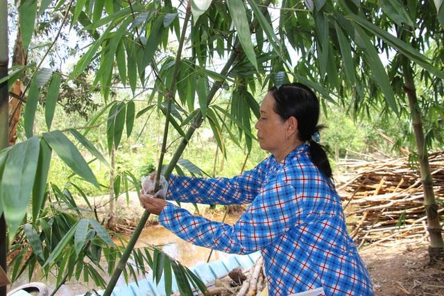 Thu lãi trăm triệu đồng nhờ trồng loại cây bán không bỏ thứ gì - 9
