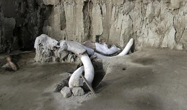 Phát hiện hàng trăm bộ xương voi ma mút ở Mexico - 1