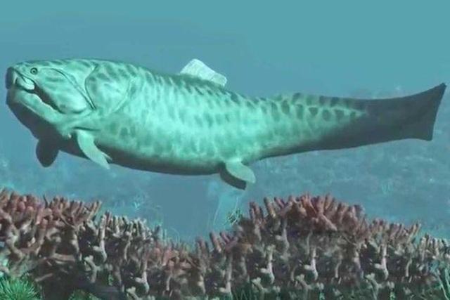 Sẽ viết lại lịch sử tiến hoá của cá mập bởi hóa thạch  410 triệu năm tuổi? - 1