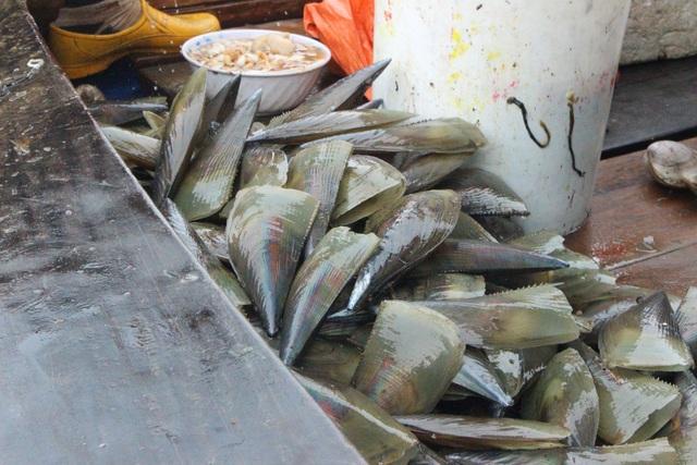 Mùa sò mai, chỉ đánh bắt gần ngư dân cũng kiếm tiền triệu mỗi ngày - 5