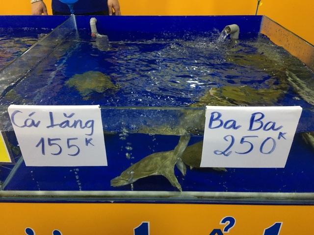 """TPHCM: Chuỗi hải sản tươi sống """"mọc như nấm sau mưa"""", dù lỗ cũng cố cầm cự - 3"""