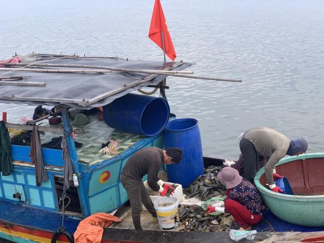 Mùa sò mai, chỉ đánh bắt gần ngư dân cũng kiếm tiền triệu mỗi ngày - 1