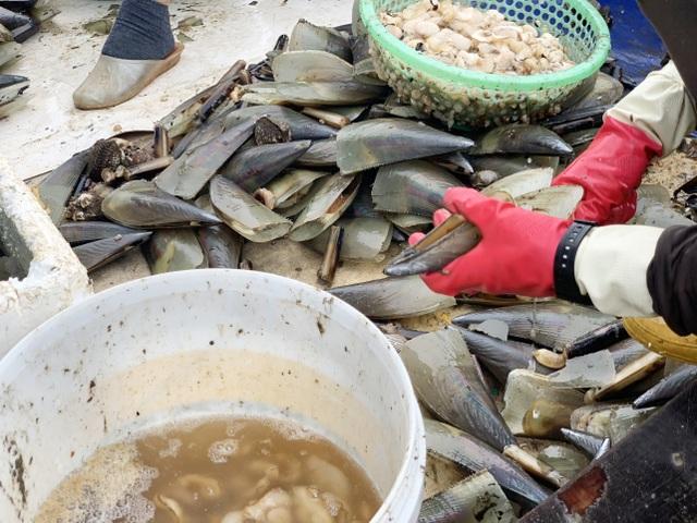Mùa sò mai, chỉ đánh bắt gần ngư dân cũng kiếm tiền triệu mỗi ngày - 8
