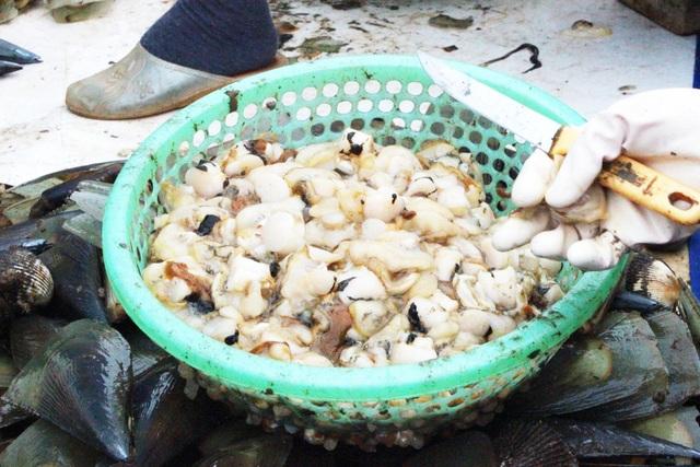 Mùa sò mai, chỉ đánh bắt gần ngư dân cũng kiếm tiền triệu mỗi ngày - 10