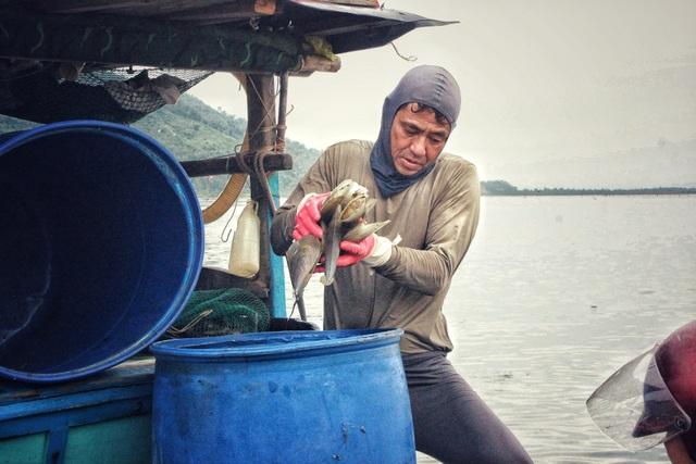 Mùa sò mai, chỉ đánh bắt gần ngư dân cũng kiếm tiền triệu mỗi ngày - 4